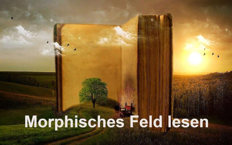im morphischen Feld lesen
